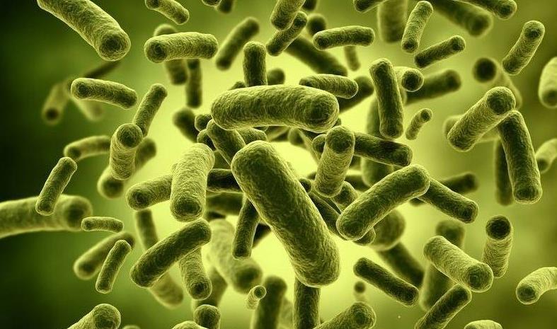 №13: Храносмилателна система: черва – възстановяване на нормалната микрофлора