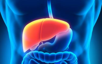 №14: Храносмилателна система: черен дроб, задстомашна жлеза – функции и чистене