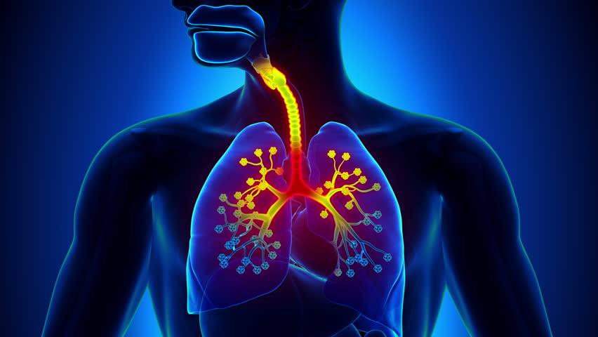 №18: Дихателна система