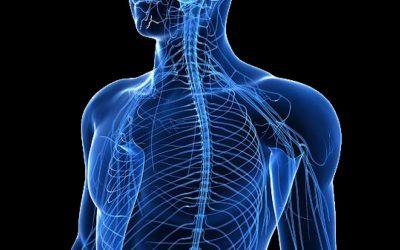№21: Нервната система